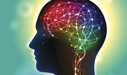 La anandamida, un neurotransmisor que incide en la felicidad