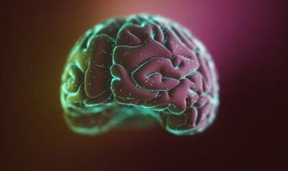 Neocórtex: estructura y funciones