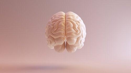 Corteza prefrontal dorsolateral: principales funciones