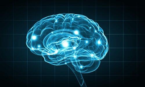 Métodos de investigación en biopsicología