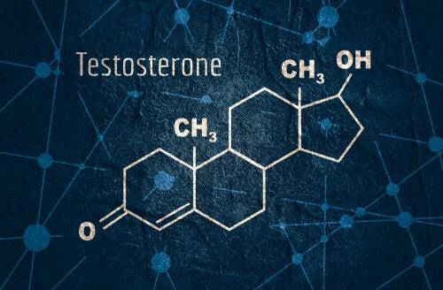 Testosterona: características y funciones