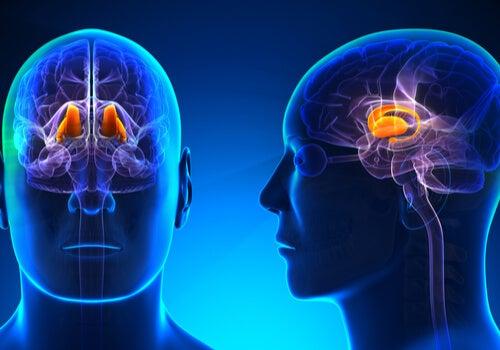 El síndrome talámico: síntomas y tratamientos