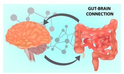 Microbiota intestinal: clave de la salud mental