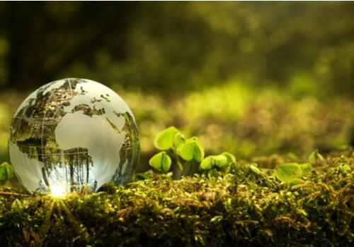 ¿Cómo puedo contribuir a mejorar el medio ambiente en mi comunidad?