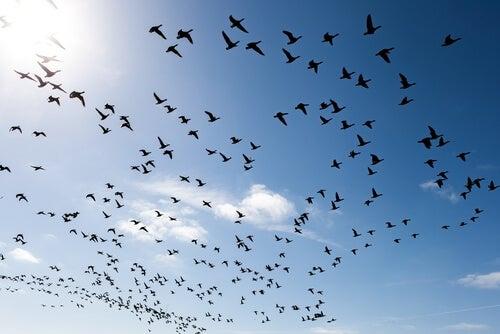 Ornitofobia o fobia a los pájaros: ¿en qué consiste?