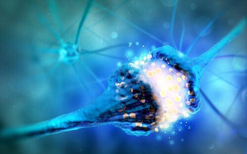 Monoaminas: qué son y funciones