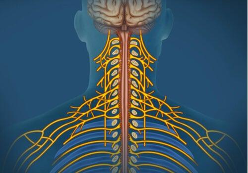 ¿Qué es el sistema nervioso autónomo?